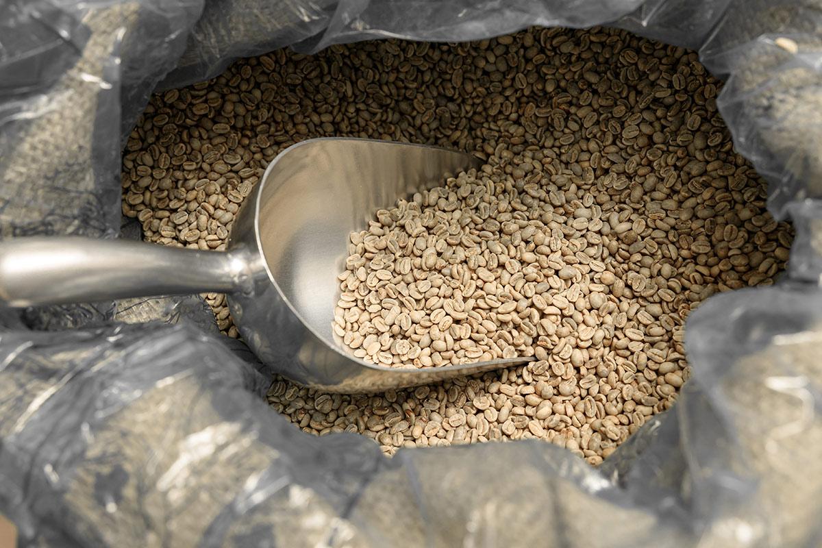 ziarna kawy przed wypaleniem